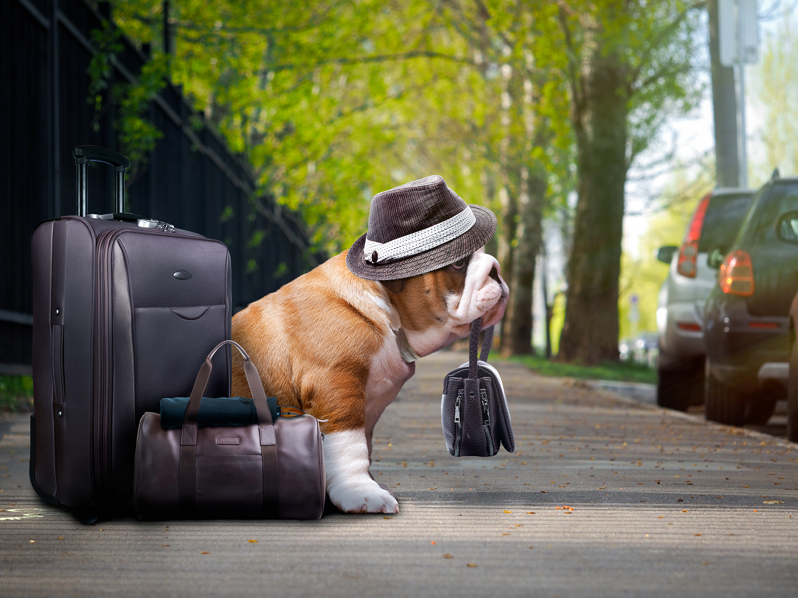 What To Do With Your Pets When Holidaying This Summer