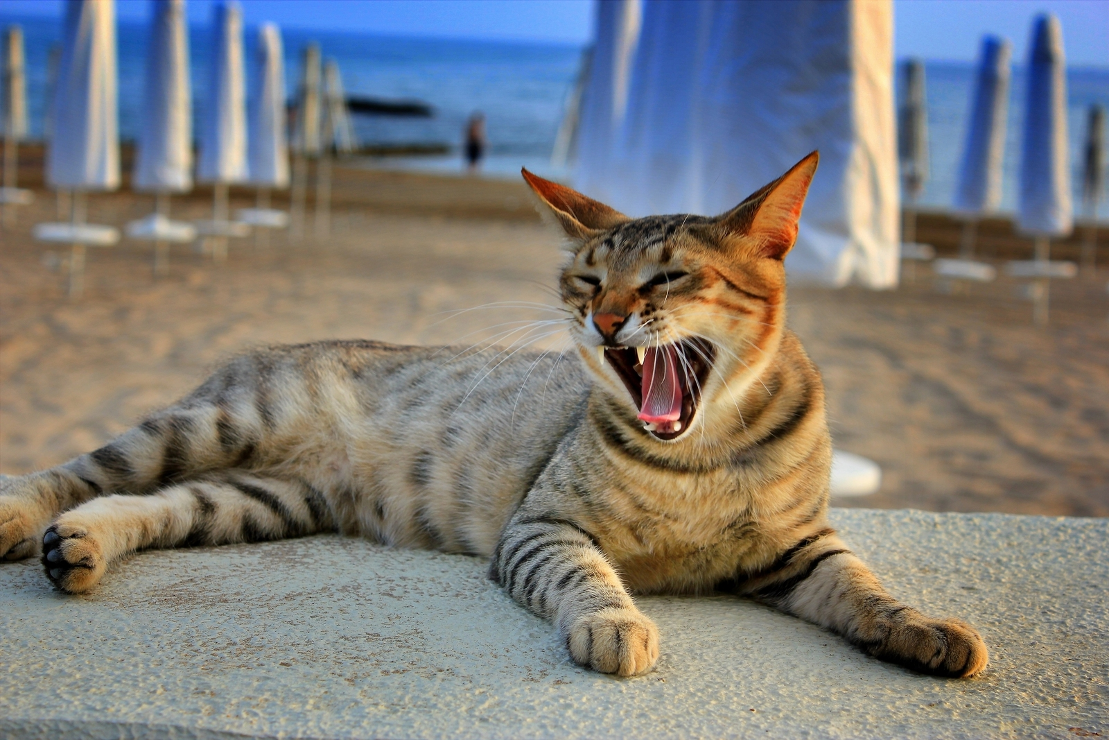 Avoid Animals When Travelling In Rabies Affected Countries